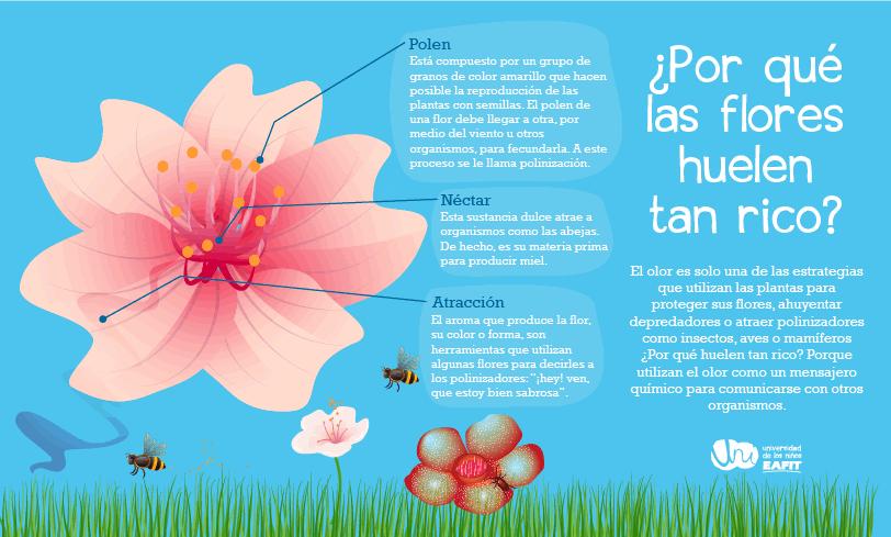 El Aroma De Las Flores
