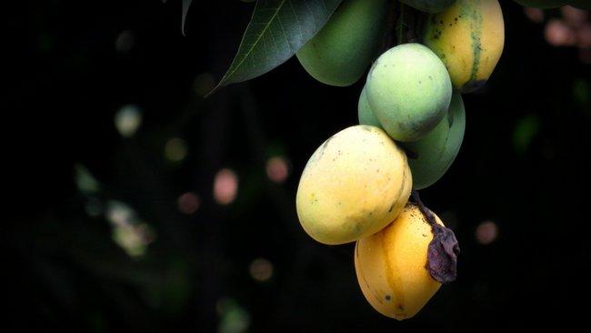 Por qu no todas las plantas tienen frutos for Arbol con raices y frutos